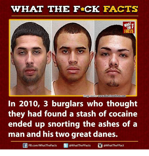 Ash, Dank, and Ed, Edd N Eddy: WHAT THE FCK FACTS  FACTS  w.miaminewtimes.com  mage Source  In 2010, 3 burglars who thought  they had found a stash of cocaine  ended up snorting the ashes of a  man and his two great danes.  Ed WhatTheFFacts  @WhatTheF Fact  FB.com/What'TheFacts