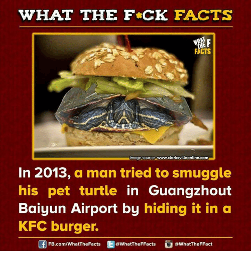 Dank, Kfc, and Turtle: WHAT THE FCK FACTS  FICTS  mage Source  www.clarksvilleonline.com  In 2013, a man tried to smuggle  his pet turtle  in Guangzhout  Baiyun Airport by hiding it in a  KFC burger.  Of FB.com/WhatThe Facts  @WhatTheFFacts  @WhatTheFFact