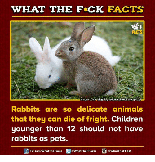 Bunny Trivia 9 Amazing Facts About Pet Rabbits: 25+ Best Memes About Delicate