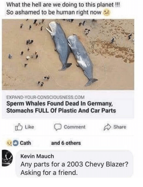 Chevy, Germany, and Hell: What the hell are we doing to this planet!!!  So ashamed to be human right now  EXPAND-YOUR-CONSCIOUSNESS.COM  Sperm Whales Found Dead In Germany,  Stomachs FULL Of Plastic And Car Parts  Like  Comment  Share  Cath  and 6 others  Kevin Mauch  Any parts for a 2003 Chevy Blazer?  Asking for a friend