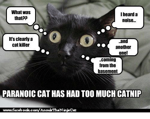what was i heard a that noise its clearly a 4867008 ✅ 25 best memes about cat killer cat killer memes