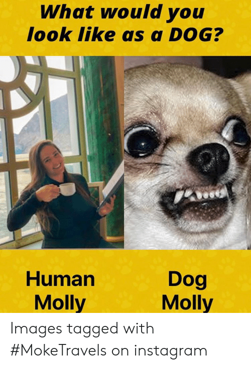 What Would You Look Like as a DOG? Dog Molly Human Molly