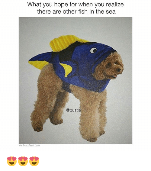 25 best memes about fishes in the sea fishes in the sea for Other fish in the sea