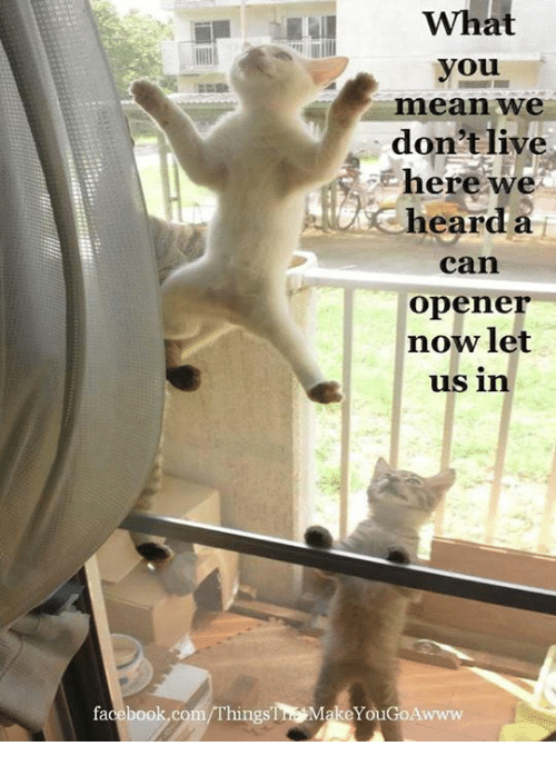 Facebook, Memes, and facebook.com: What  you  mean we  don'tlive  here we  Cheard a  can  opener  nowlet  us in  facebook.com/Things'㎎MakeYouGoAwww