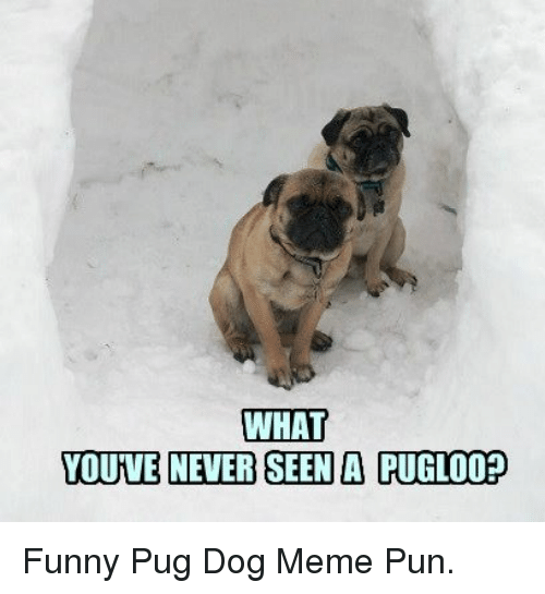 What Youve Never Seen A Pugloo Funny Pug Dog Meme Pun Funny