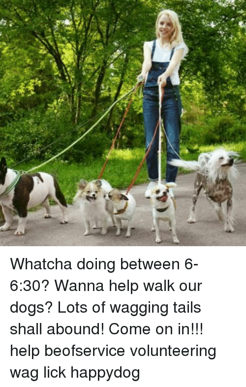 Whatcha Doing Between 6-630? Wanna Help Walk Our Dogs? Lots