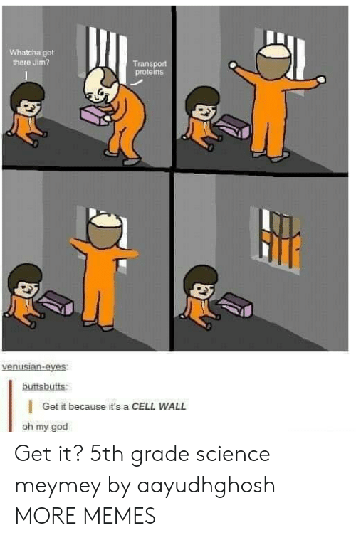 Dank, God, and Memes: Whatcha got  here Jim?  Transport  proteins  buttsbutts  Get it because it's a CELL WALL  oh my god Get it? 5th grade science meymey by aayudhghosh MORE MEMES