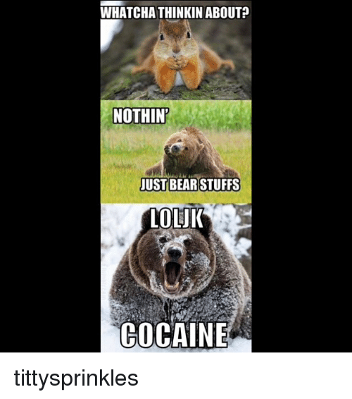 whatcha thinkin about nothin just bear stuffs loluk cocaine tittysprinkles 6848398 25 best just bear stuffs memes whatcha thinkin memes, just bear