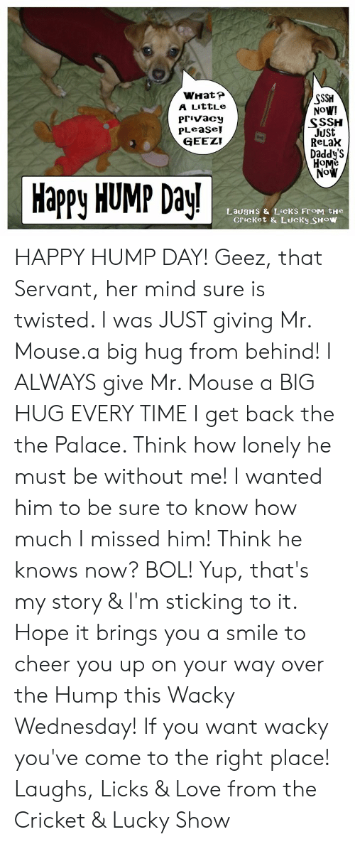Hump Day, Love, and Memes: WHatr  A LittLe  Privacy  PLeaSe!  GEEZT  SSSH  NoW!  SSSH  JUSt  ReLaX  Daddy'S  No  Happy HUMP Day!  Cricket & LUcKy SHOw HAPPY HUMP DAY!  Geez, that Servant, her mind sure is twisted.  I was JUST giving Mr. Mouse.a big hug from behind!  I ALWAYS give Mr. Mouse a BIG HUG EVERY TIME I get back the the Palace.  Think how lonely he must be without me!  I wanted him to be sure to know how much I missed him!  Think he knows now?  BOL! Yup, that's my story & I'm sticking to it.  Hope it brings you a smile to cheer you up on your way over the Hump this Wacky Wednesday!  If you want wacky you've come to the right place! Laughs, Licks & Love from the Cricket & Lucky Show
