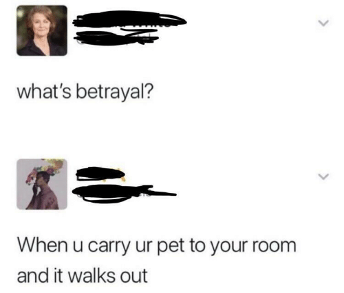 Pet, Whats, and Betrayal: what's betrayal?  When u carry ur pet to your room  and it walks out