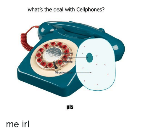 whats the deal with cellphones mitochon pls me irl 29682205 what's the deal with cellphones? mitochon pls irl meme on me me