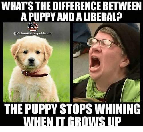 Memes, Puppy, and 🤖: WHAT'S THE DIFFERENCE BETWEEN  A PUPPY AND A LIBERAL?  @Millennial Republicans  THE PUPPY STOPS WHINING  WHEN IT GROWS UP
