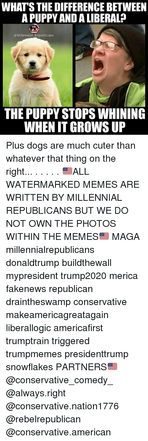 Dogs, Memes, and American: WHAT'S THE DIFFERENCE BETWEEN  A PUPPY AND A LIBERAL?  MR.  @Millennial Republicans  THE PUPPY STOPS WHINING  WHEN IT GROWS UIP Plus dogs are much cuter than whatever that thing on the right... . . . . . 🇺🇸ALL WATERMARKED MEMES ARE WRITTEN BY MILLENNIAL REPUBLICANS BUT WE DO NOT OWN THE PHOTOS WITHIN THE MEMES🇺🇸 MAGA millennialrepublicans donaldtrump buildthewall mypresident trump2020 merica fakenews republican draintheswamp conservative makeamericagreatagain liberallogic americafirst trumptrain triggered trumpmemes presidenttrump snowflakes PARTNERS🇺🇸 @conservative_comedy_ @always.right @conservative.nation1776 @rebelrepublican @conservative.american