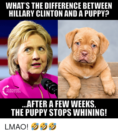 Hillary Clinton, Lmao, and Memes: WHAT'S THE DIFFERENCE BETWEEN  HILLARY CLINTON AND A PUPPY?  TESR  TURNIN  POINT USA  AFTER A FEW WEEKS,  THE PUPPY STOPS WHINING! LMAO! 🤣🤣🤣