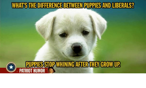 Whats The Difference Between Puppies And Liberals They Grow Up