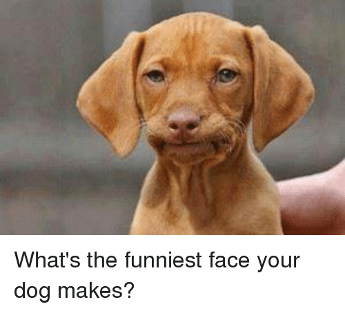 Whats the funniest face your dog makes meme on me memes and funniest whats the funniest face your dog makes voltagebd Images