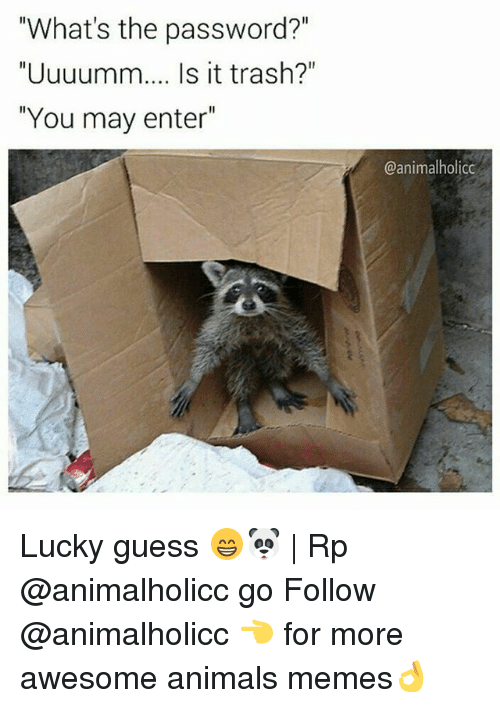 "Animals, Memes, and Trash: ""What's the password?""  ""Uuuumm.... Is it trash?""  ""You may enter  @animal holicc Lucky guess 😁🐼 