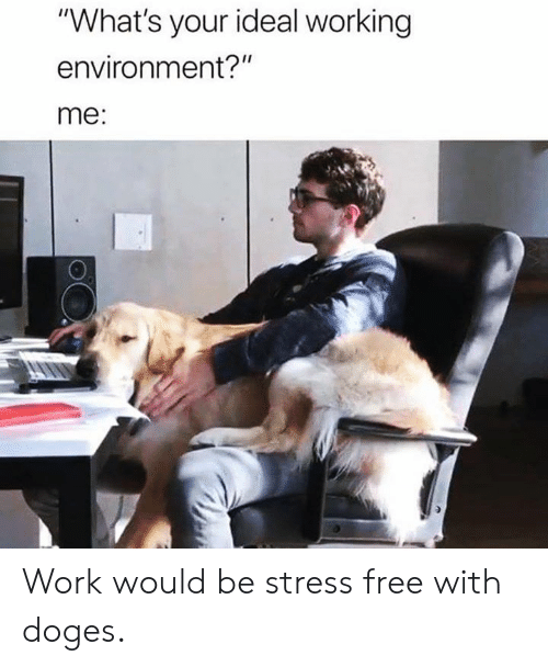 "Dank, Work, and Free: ""What's your ideal working  environment?""  me: Work would be stress free with doges."