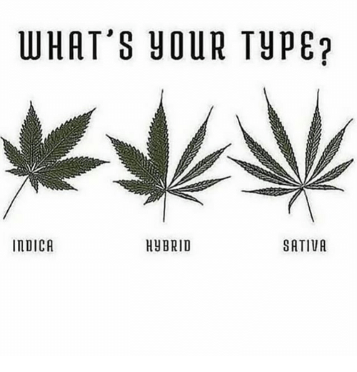 Memes, 🤖, and Sativa: WHAT'S YOUR TYPE  IMDICA  HYBRID  SATIVA