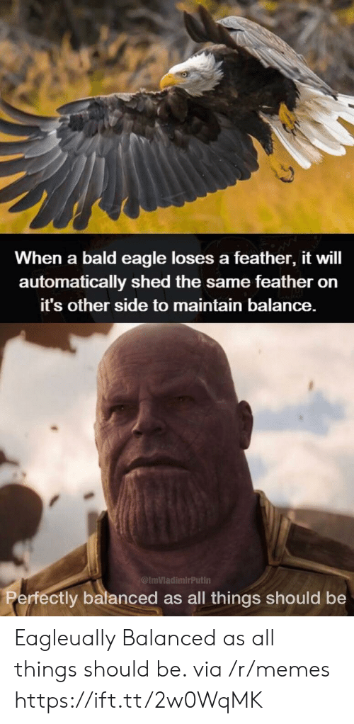 Memes, Eagle, and Bald Eagle: When a bald eagle loses a feather, it will  automatically shed the same feather orn  it's other side to maintain balance.  ImVladimirPutin  ctly balanced as all things should be Eagleually Balanced as all things should be. via /r/memes https://ift.tt/2w0WqMK