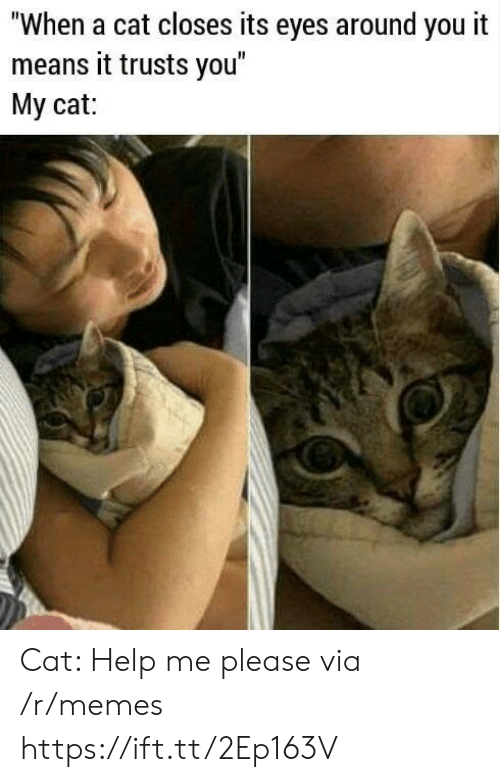 "Memes, Help, and Cat: ""When a cat closes its eyes around you it  means it trusts you  My cat: Cat: Help me please via /r/memes https://ift.tt/2Ep163V"