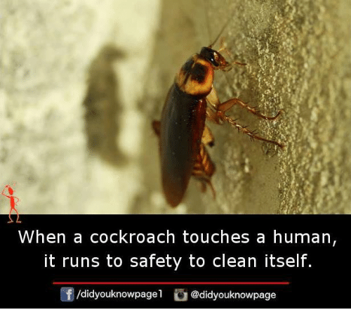 Memes, 🤖, and Human: When a cockroach touches a human  it runs to safety to clean itself.  didyouknowpagel  Cu  @didyouknowpage