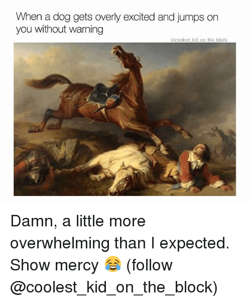 Memes, Mercy, and 🤖: When a dog gets overly excited and jumps on  you without warning  acoolest kid on the block  12 Damn, a little more overwhelming than I expected. Show mercy 😂 (follow @coolest_kid_on_the_block)