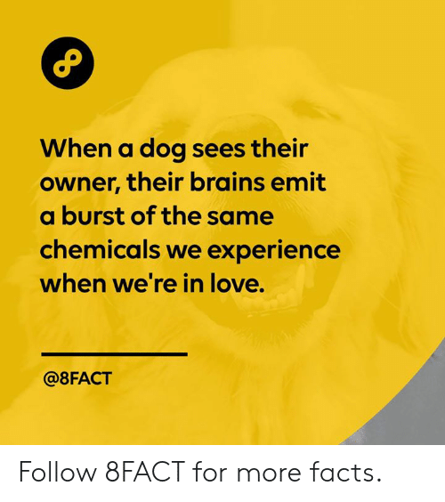 Brains, Dank, and Facts: When a dog sees their  owner, their brains emit  a burst of the same  chemicals we experience  when we're in love.  @8FACT Follow 8FACT for more facts.