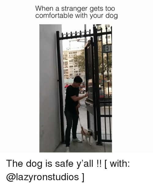 Comfortable, Memes, and 🤖: When a stranger gets too  comfortable with your dog  El The dog is safe y'all !! [ with: @lazyronstudios ]