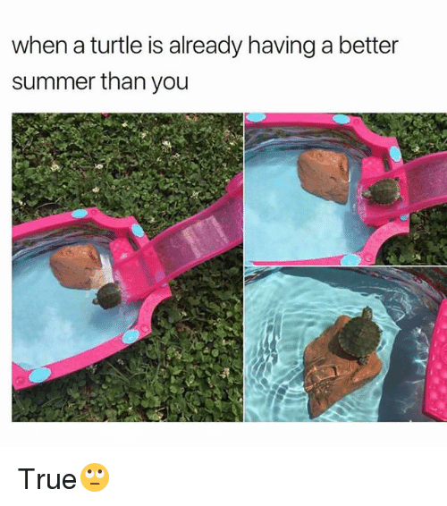 Funny, True, and Summer: when a turtle is already having a better  summer than you True🙄