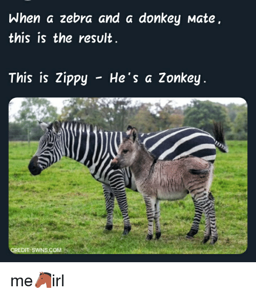 When a Zebra and a Donkey Mate This Is the Result This Is