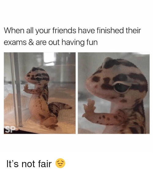 Friends, All Your Friends, and Fun: When all your friends have finished their  exams & are out having fun It's not fair 😔