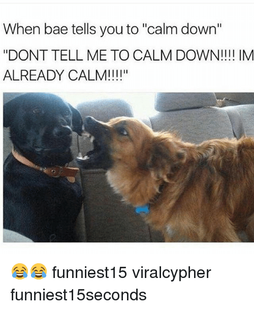 """Bae, Funny, and Down: When bae tells you to """"calm down""""  """"DONT TELL ME TO CALM DOWN!!!! IM  ALREADY CALM!!!!"""" 😂😂 funniest15 viralcypher funniest15seconds"""