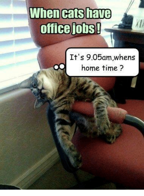 When Cats Have Office Jobs Its 905am Whens Home Time Cats Meme