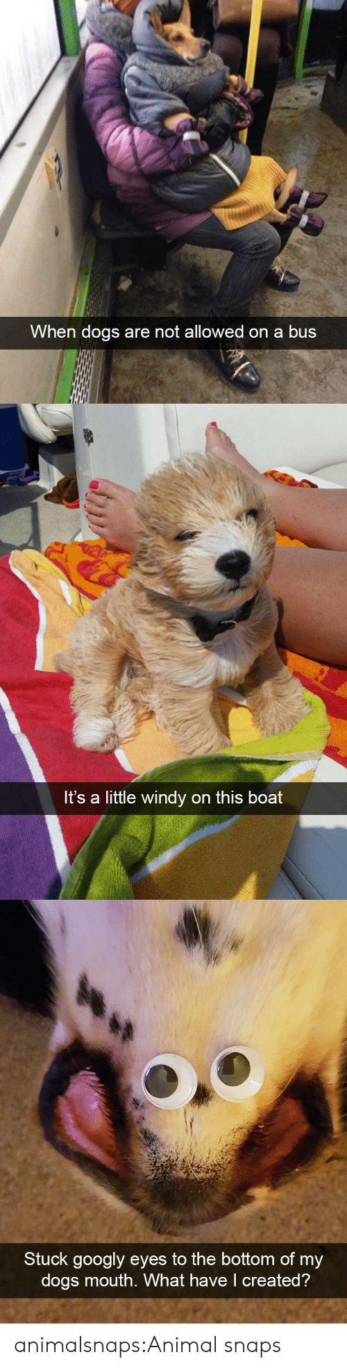 Dogs, Tumblr, and Animal: When dogs are not allowed on a bus   Its a little windy on this boat   Stuck googly eyes to the bottom of my  dogs mouth. What have I created? animalsnaps:Animal snaps