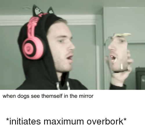 Dogs, Reddit, and Mirror: when dogs see themself in the mirror
