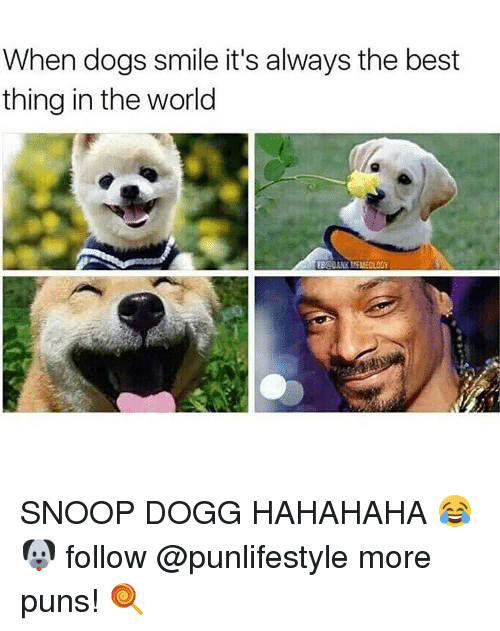 Memes, Snoop, and Snoop Dogg: When dogs smile it's always the best  thing in the world  EBADANKLEMEOLOGY SNOOP DOGG HAHAHAHA 😂🐶 follow @punlifestyle more puns! 🍭