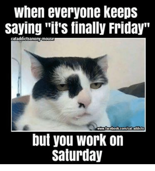 thank god its friday cat