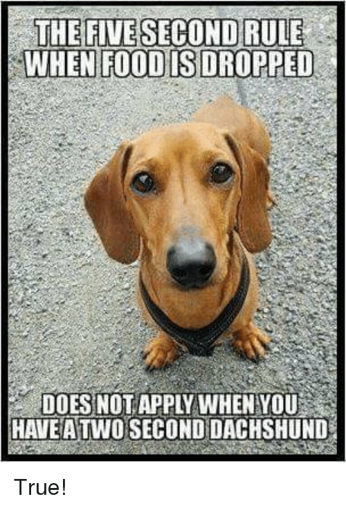 Food, Memes, and True: WHEN FOOD ISDROPPED  DOESNOT APPLY WHEN YOU  HAVEA TWO SECOND DACHSHUND True!