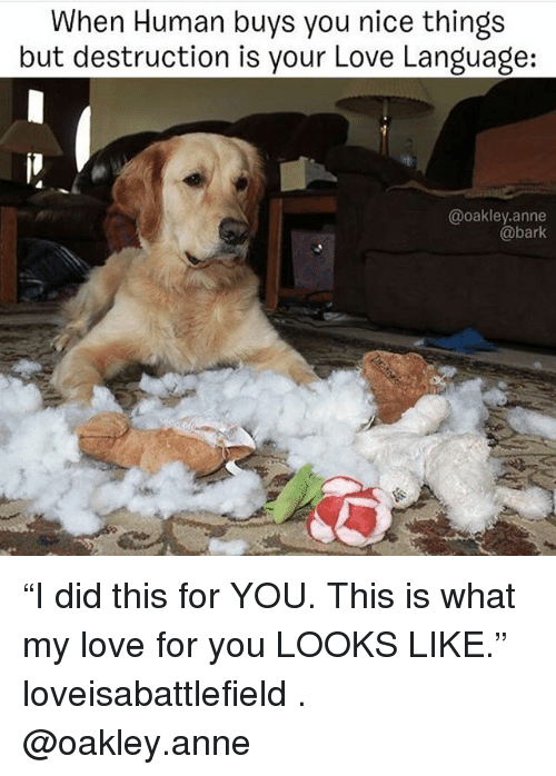 """Love, Memes, and Nice: When Human buys you nice things  but destruction is your Love Language:  @oakley.anne  @bark """"I did this for YOU. This is what my love for you LOOKS LIKE."""" loveisabattlefield . @oakley.anne"""