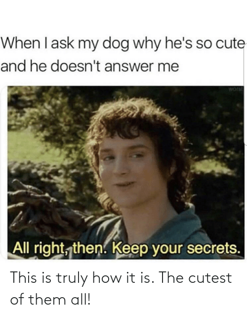 Cute, How, and Answer: When I ask my dog why he's so cute  and he doesn't answer me  worst  All right, then. Keep your secrets. This is truly how it is. The cutest of them all!