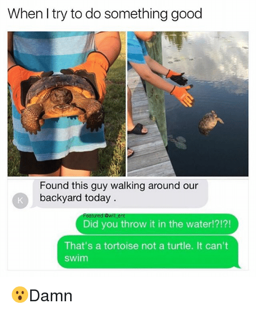 Memes, Good, and Today: When I try to do something good  Found this guy walking around our  backyard today  Did you throw it in the water!?!?!  That's a tortoise not a turtle. It can't  swim 😮Damn
