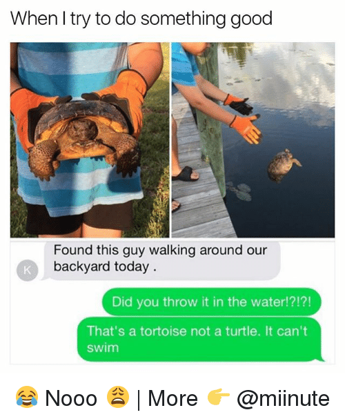 Funny, Good, and Today: When I try to do something good  Found this guy walking around our  backyard today  Did you throw it in the water!?!?!  That's a tortoise not a turtle. It can't  swim 😂 Nooo 😩 | More 👉 @miinute