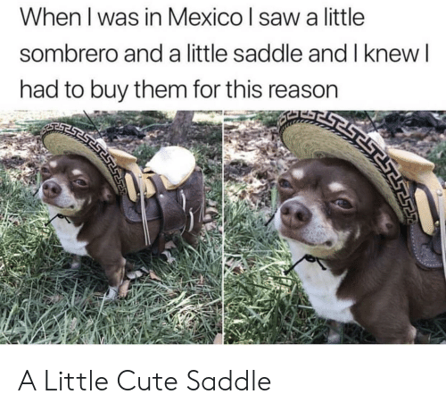 Cute, Saw, and Mexico: When I was in Mexico l saw a little  sombrero and a little saddle and I knew  had to buy them for this reason A Little Cute Saddle