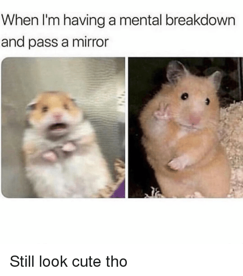 Cute, Mirror, and Girl Memes: When I'm having a mental breakdown  and pass a mirror Still look cute tho