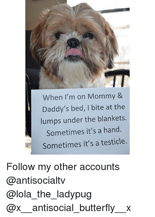Memes, Butterfly, and Antisocial: When I'm on Mommy &  Daddy's bed, I bite at the  lumps under the blankets.  Sometimes it's a hand.  Sometimes it's a testicle. Follow my other accounts @antisocialtv @lola_the_ladypug @x__antisocial_butterfly__x