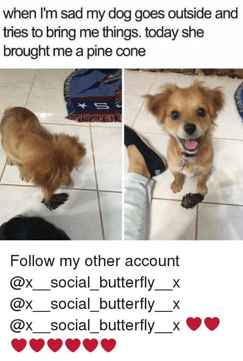 Memes, Butterfly, and Today: when I'm sad my dog goes outside and  tries to bring me things. today she  brought me a pine cone Follow my other account @x__social_butterfly__x @x__social_butterfly__x @x__social_butterfly__x ❤️❤️❤️❤️❤️❤️❤️❤️