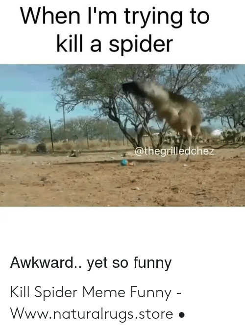 When I M Trying To Kill A Spider Awkward Yet So Funny Kill Spider