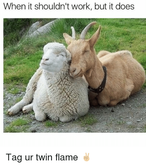 When It Shouldn't Work but It Does Tag Ur Twin Flame ✌🏼️ | Meme