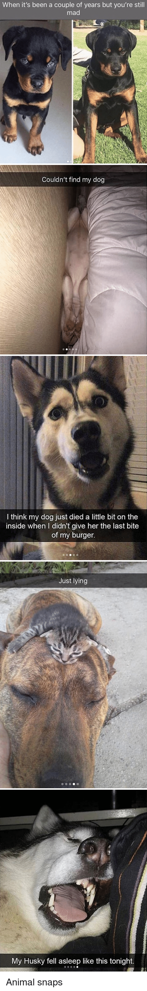 Animal, Husky, and Mad: When it's been a couple of years but you're still  mad   Couldn't find my dog   I think my dog just died a little bit on the  inside when I didn't give her the last bite  of my burger.   Just lying   My Husky fell asleep like this tonight. Animal snaps